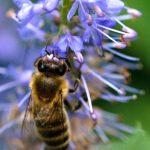 """Volksbegehren """"Rettet die Bienen!"""" – Bekanntmachung"""